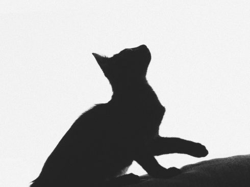 cropped-animal-animal-photography-black-and-white-1815484-3.jpg
