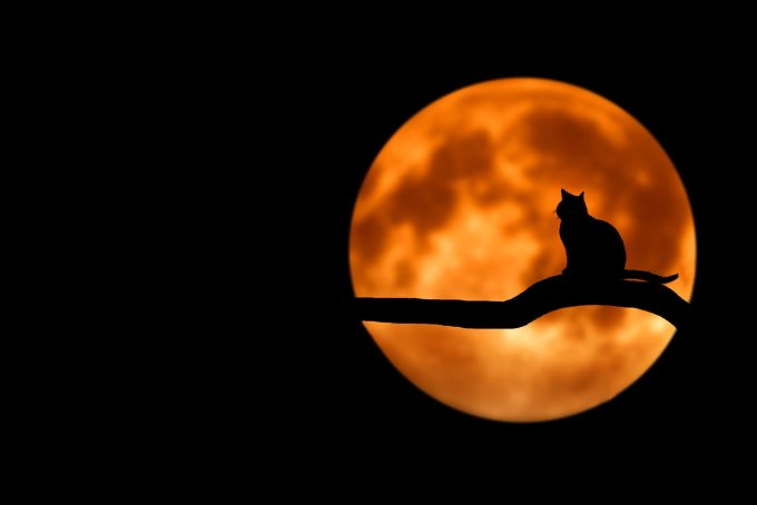 animal-branch-cat-35888